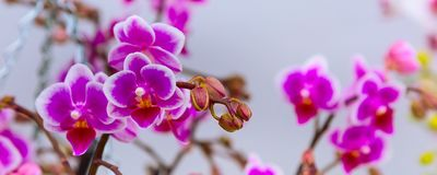 Белое и фиолетовое знамя цветка орхидеи Стоковое Фото