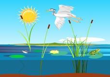 Белое летание цапли над озером, стоковое изображение