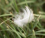 Белое перо в траве Стоковое Изображение RF