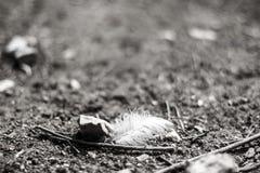 Белое перо птицы на том основании Стоковая Фотография