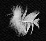 Белое перо птицы на черной предпосылке Стоковое Изображение