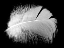 Белое перо птицы на черной предпосылке Стоковая Фотография RF