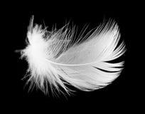 Белое перо птицы на черной предпосылке Стоковое Фото