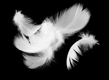 Белое перо птицы на черной предпосылке Стоковые Фотографии RF