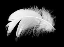 Белое перо птицы на черной предпосылке Стоковые Фото