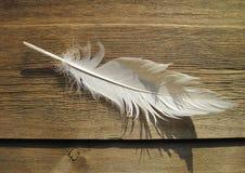Белое перо птицы Стоковая Фотография