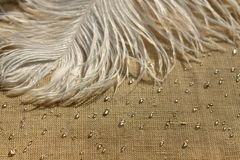 Белое перо страуса с падением воды стоковые фотографии rf