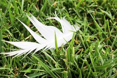 Белое перо Стоковые Изображения