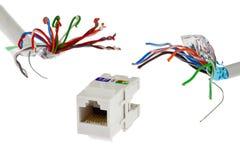 Белое пластичное гнездо сети RJ45 UTP женское погнано 2 проводами которое выглядеть как щупальца изверга, белым ба кабеля UTP/STP стоковые фотографии rf