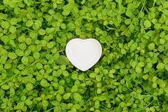 Белое сердце на кровати клевера Стоковые Фотографии RF