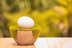 Белое яичко на искусственной траве в баке, на деревянном столе с зеленым цветом Стоковое фото RF