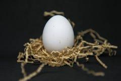 Белое яйцо цыпленка на соре стоковое фото rf