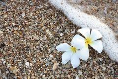 Белое Leelawadee на песке Стоковая Фотография RF