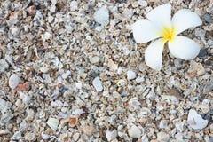 Белое Leelawadee Стоковые Фотографии RF