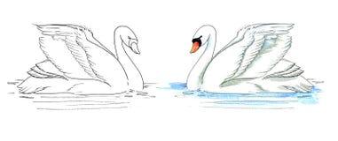 Белой лебедь покрашенный акварелью на воде покрашено иллюстрация вектора