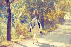 Белокурая женщина девушки ехать белая лошадь в следе Стоковые Фотографии RF