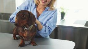 Белокурая женщина штрихует немецкую барсук-собаку стоковые изображения rf