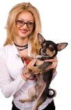 белокурая изолированная собака чихуахуа стоковые изображения