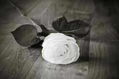 бело Стоковое Фото