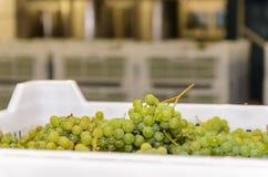 Белые виноградины в пластиковой коробке против других коробок стоковые фото