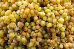 Белые виноградины Стоковые Изображения