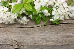 белые вишневые цвета на старой деревянной предпосылке Взгляд сверху Стоковые Фото