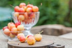 Белые вишни на древесине внутри Стоковые Изображения