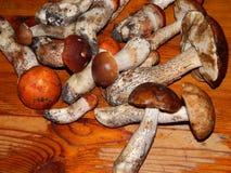 Белые грибы собирают и варят Стоковая Фотография