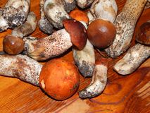 Белые грибы собирают и варят Стоковое Изображение RF