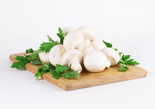 Белые грибы Стоковое Изображение RF