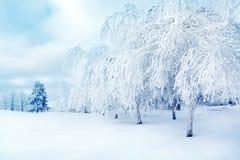 Белые деревья в снеге в городе паркуют Красивейшее изображение зимы landscape стоковая фотография rf