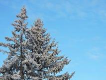 Белые деревья зимы, Литва Стоковое Фото