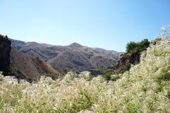 Белые заводы на предпосылке коричневых гор! стоковое изображение rf