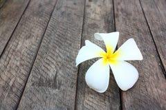 Белые и желтые цветки frangipani Стоковое Фото