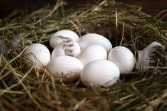 Белые и коричневые яйца на соломе и деревянной темной предпосылке стоковое фото