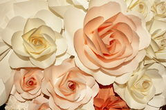 Белые и померанцовые розы стоковые изображения rf
