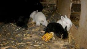 Белые и черные кролики в клетке или hutch фермы стоковое изображение rf