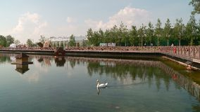 Белые и черные лебеди на пруде города с домом для птиц акции видеоматериалы