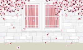белые кирпичная стена и окна с цветками вишневого цвета стоковое изображение