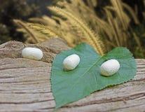 Белые кокон и mulbery листают на мертвом дереве Стоковое Изображение RF