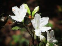 Белые красивые цветки на конце стержня вверх Стоковые Изображения RF
