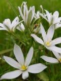 Белые красивые цветки Сфотографированный от вблизи стоковая фотография rf