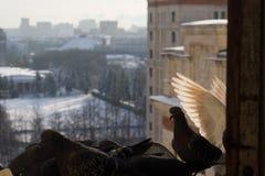 белые крыла Стоковая Фотография RF