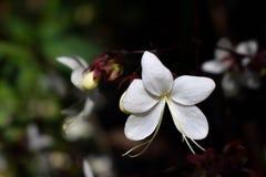 Белые лепестки орхидеи стоковые фотографии rf