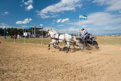 Белые лошади и экипаж на финишной черте spectacular исходного рубежа Стоковое Изображение RF
