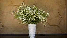 Белые маленькие цветки в белом цветочном горшке Стоковая Фотография