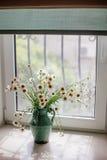 Белые маргаритки в вазе стоковые фотографии rf