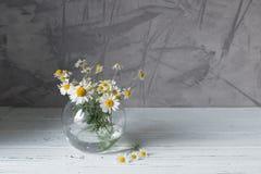 Белые маргаритки в стеклянной вазе на серой предпосылке стоковая фотография rf