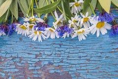 Белые маргаритки и голубая рамка cornflowers Стоковое Изображение RF