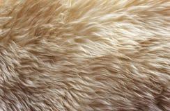 Белые мягкие шерсти текстурируют предпосылку, безшовную вату, шерсть овец света естественную, текстуру белого пушистого меха, ост стоковое фото